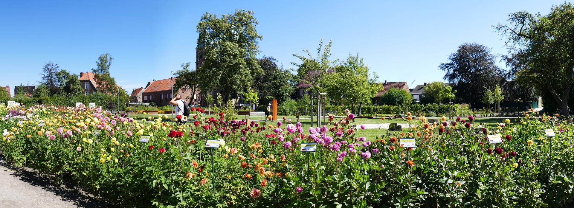 Panorama Dahliengarten